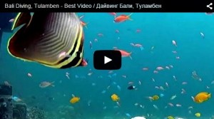 video bali-diving